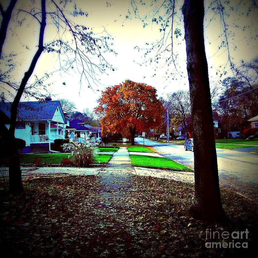 Autumn Wonder Photograph