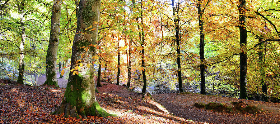 Autumn Woodland, Aberfeldy Photograph by Kathy Collins