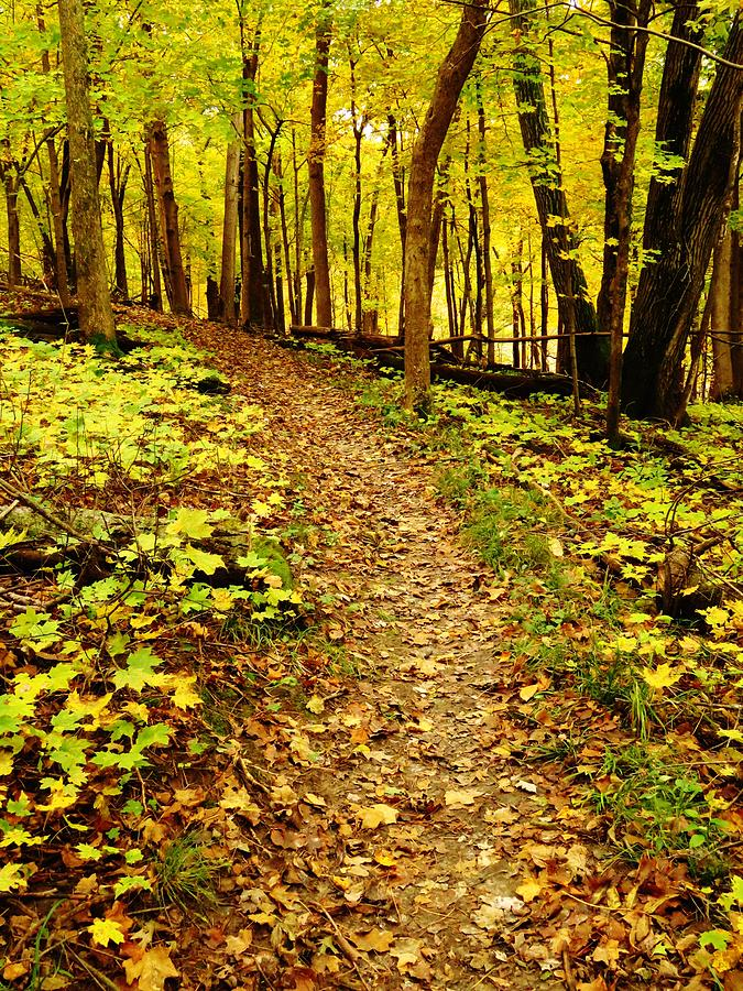 Autumn Yellows and Greens  by Lori Frisch