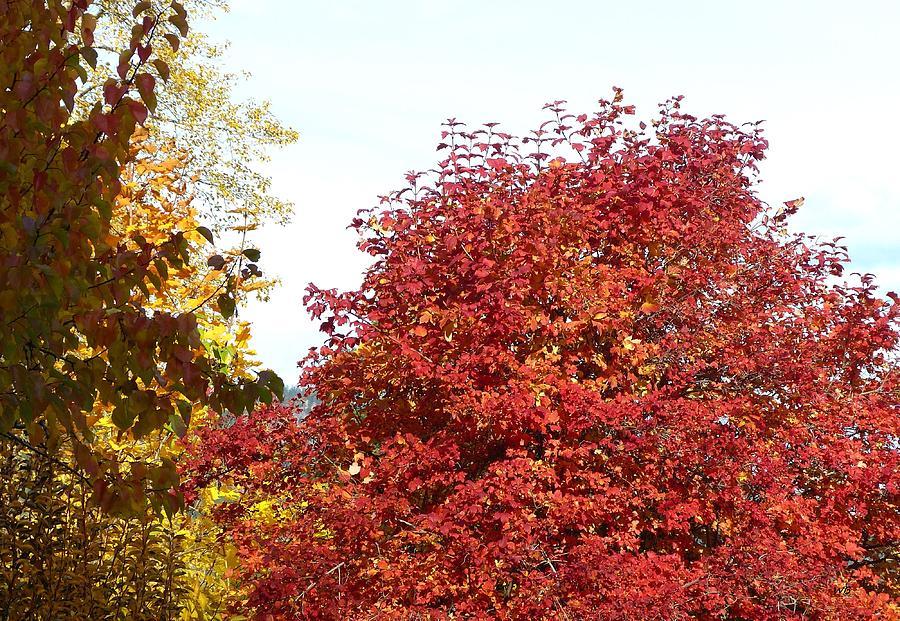 Autumn Zest by Will Borden