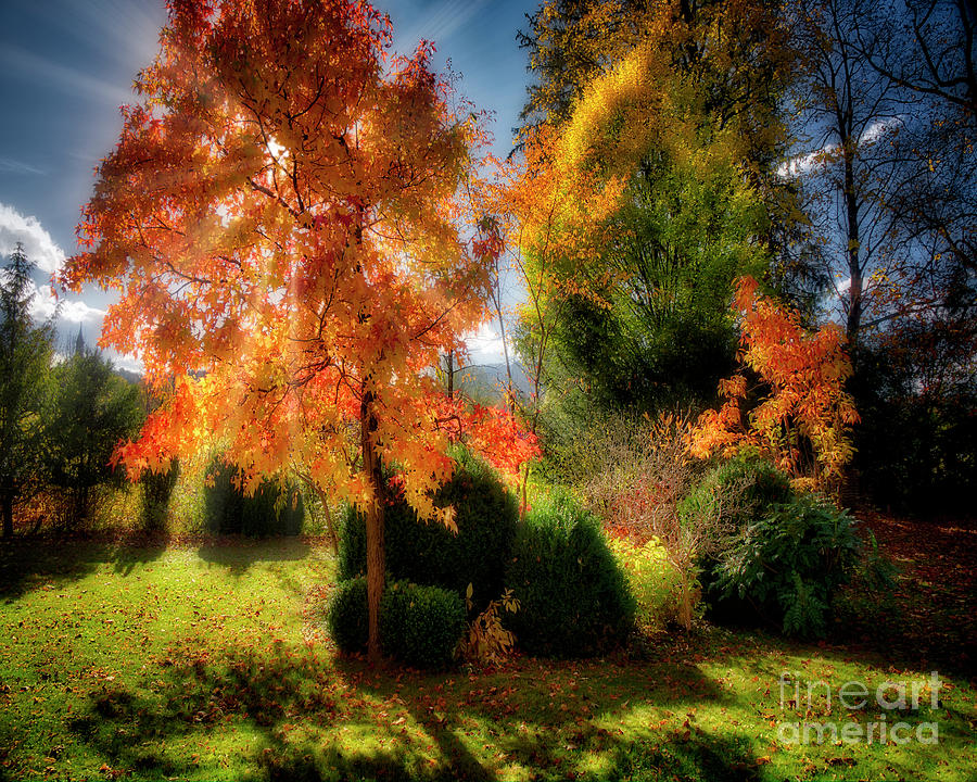 Autumnal Glory by Edmund Nagele