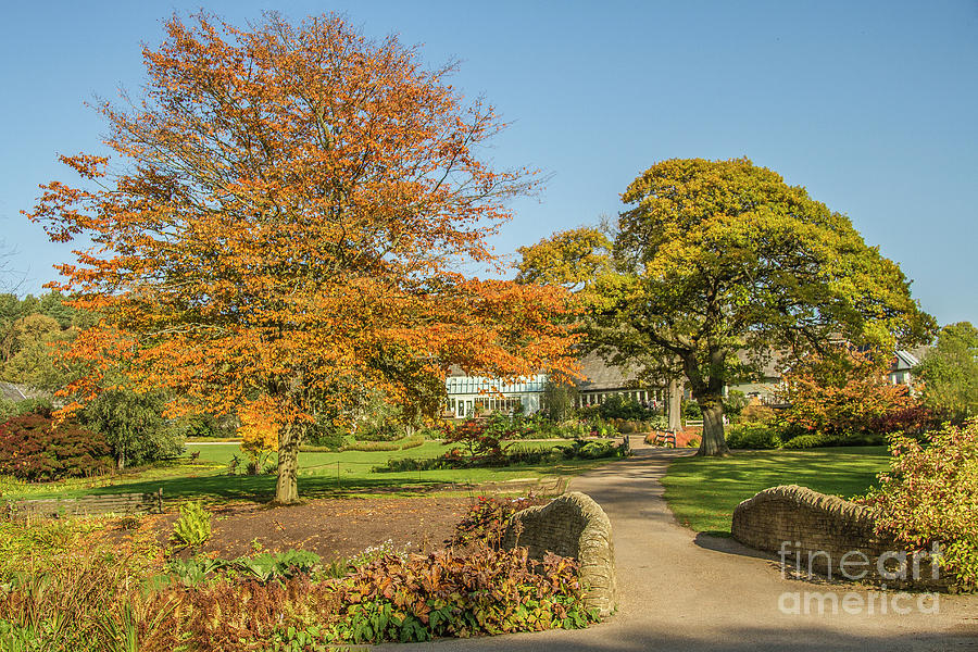 Autumnal Landscape by Sandra Cockayne ADPS