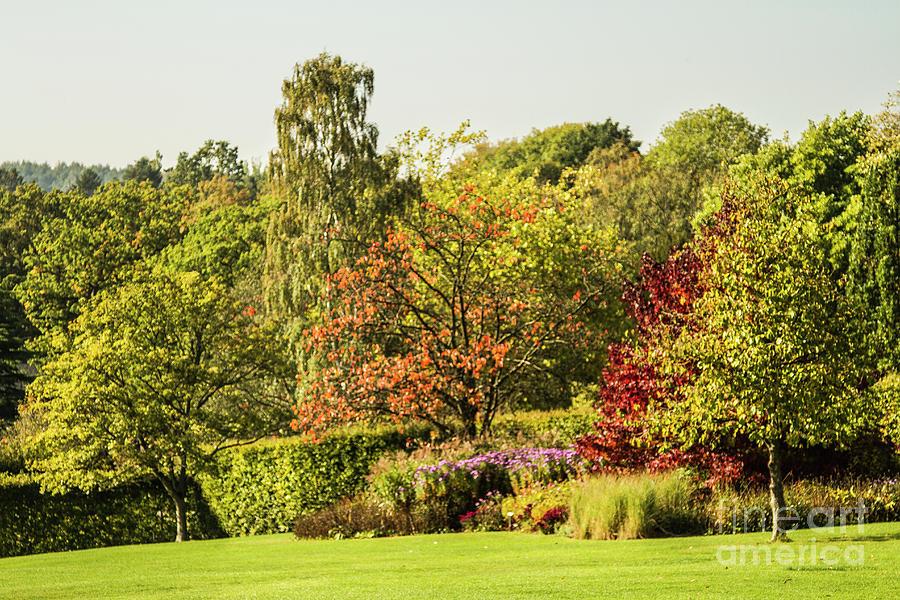 Autumnal Trees by Sandra Cockayne ADPS