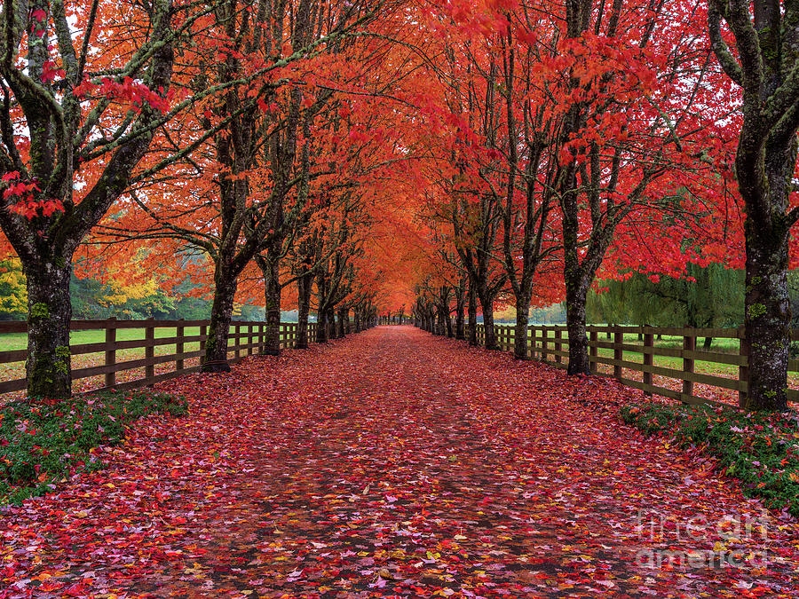 Autumns Path Of The Fallen Leaves Photograph