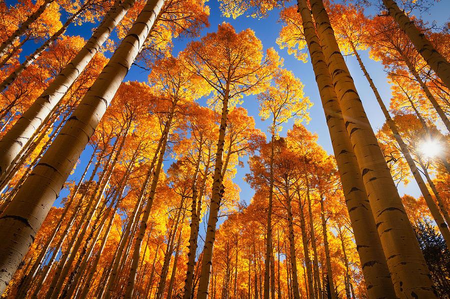 Autumn's Splendor  by Saija Lehtonen