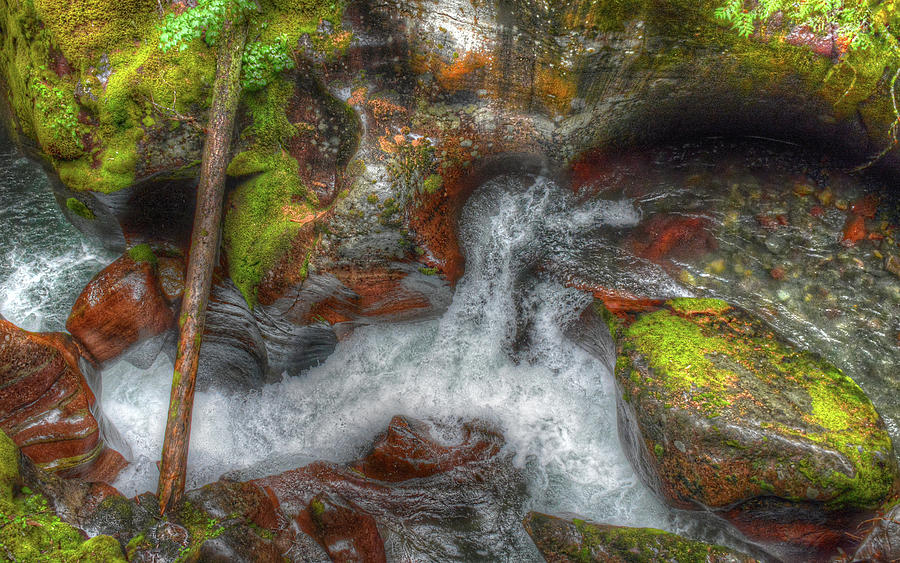 Avalanche Creek by Michael Kirk