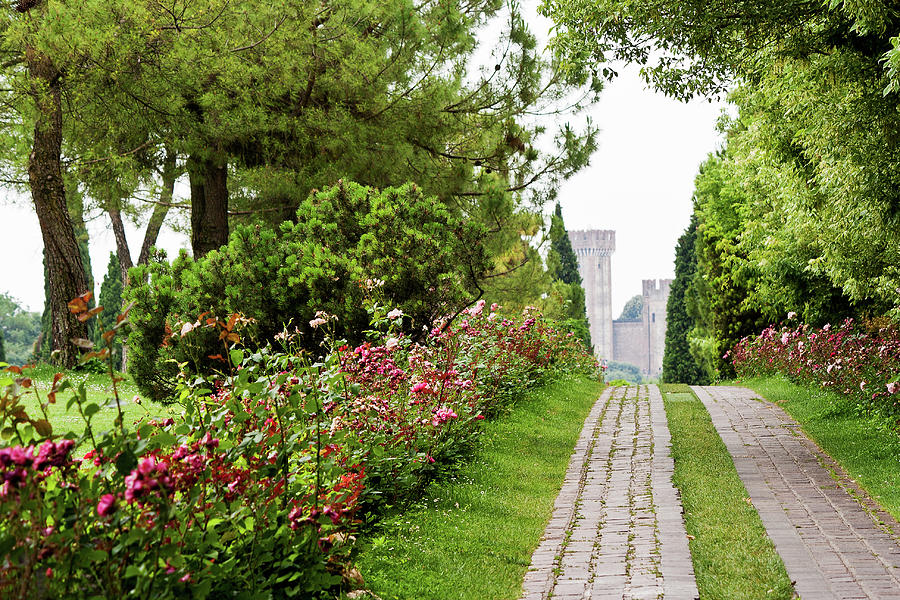 Avenue Of Roses Photograph by Francesco Damin
