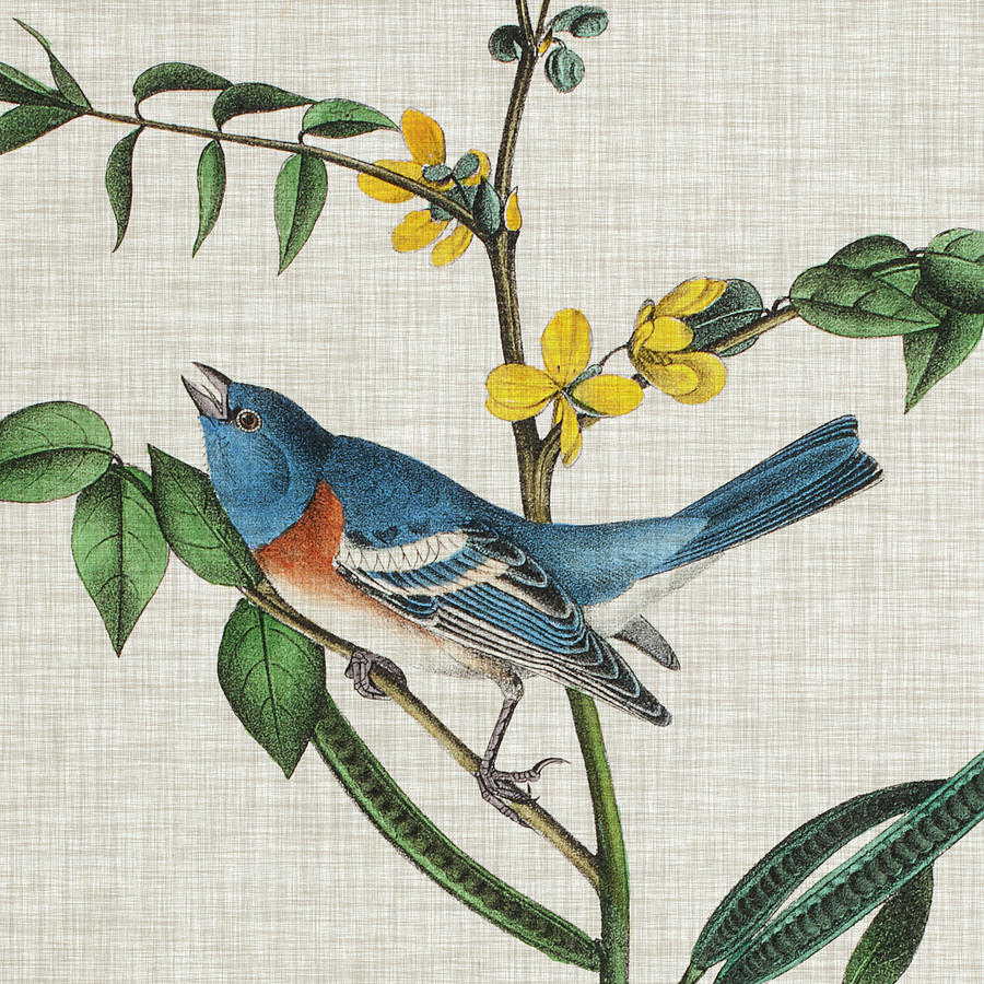 Animals Painting - Avian Crop Viii by John James Audubon
