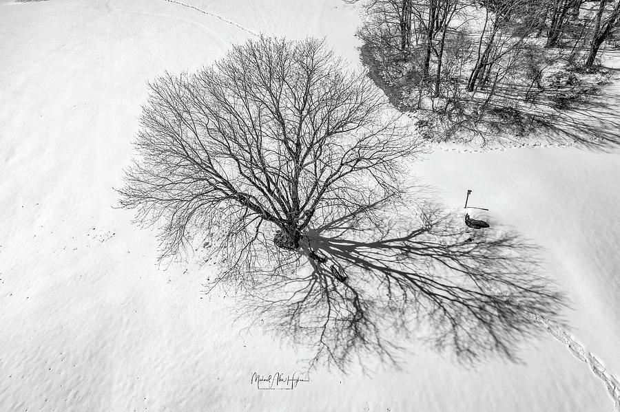 Awaiting Spring  by Michael Hughes
