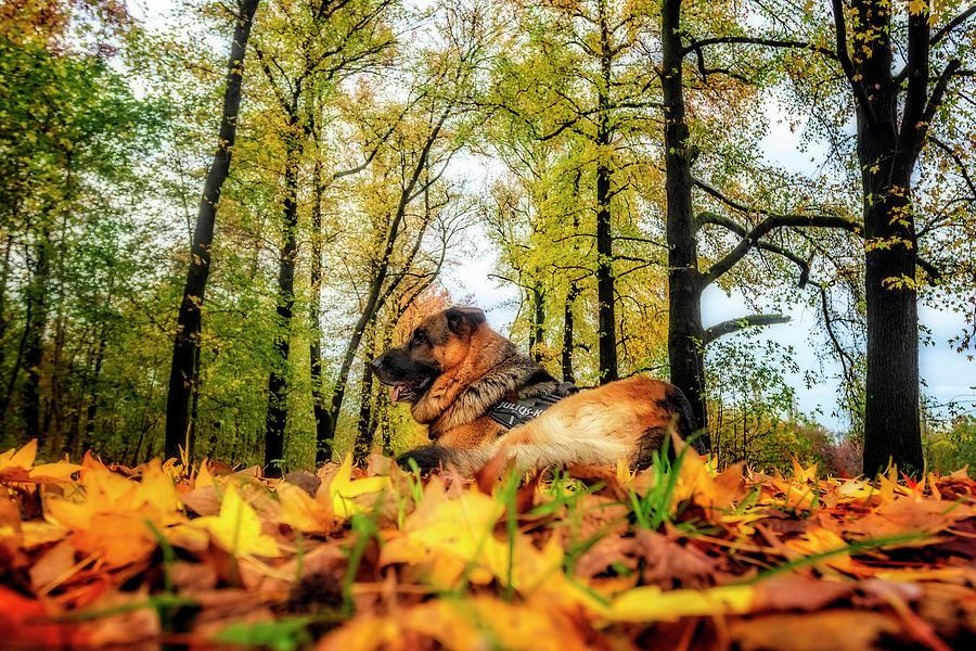 Axel among autumnal leaves by Roberto Pagani