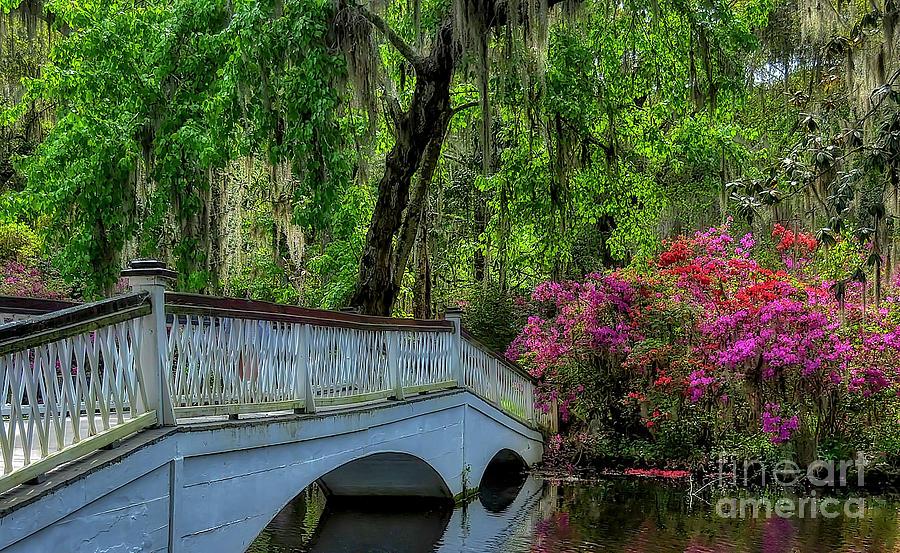 Azalea Bridge by Kathy Baccari