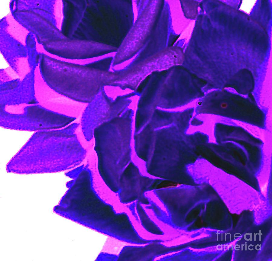 Azure Pink Digital Art