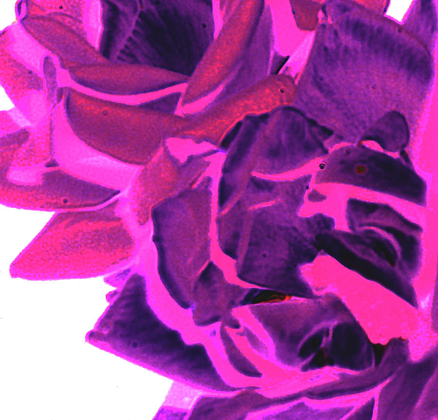 Azure Rose Digital Art