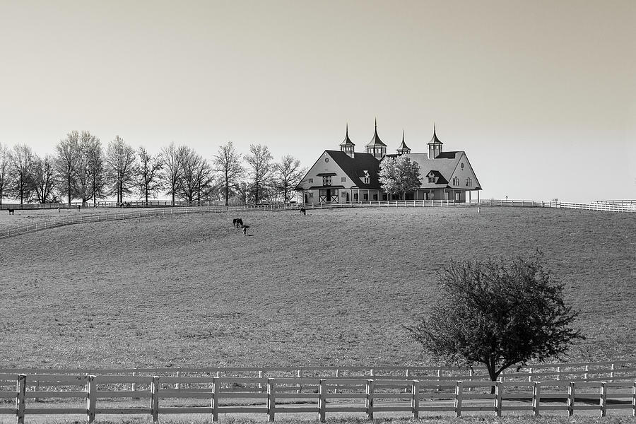 B and W Horse farm by Jack R Perry