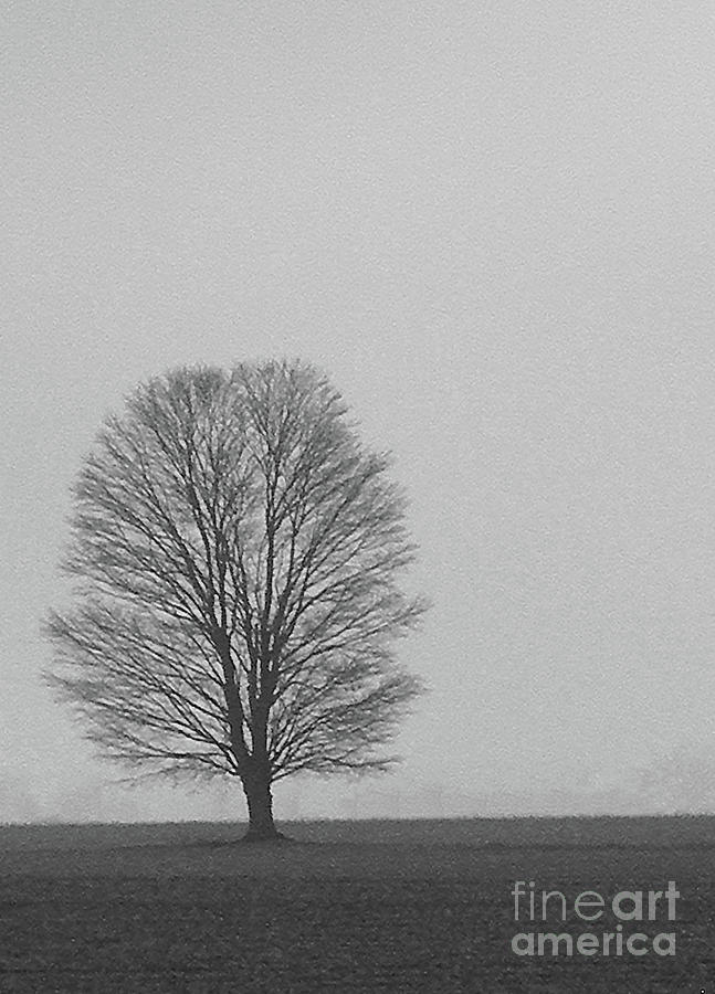 B and W TREE FOG by Skip Willits