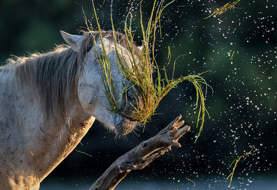 Eel Grass for Breakfast by Paul Martin