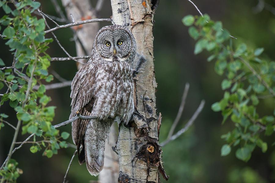Avian Photograph - B48 by Joshua Ables Wildlife