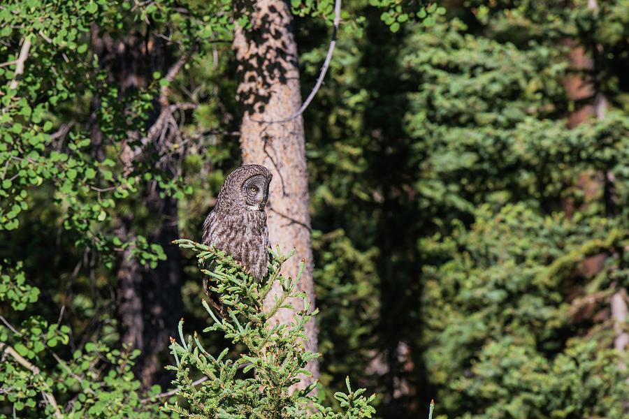 Avian Photograph - B50 by Joshua Ables Wildlife