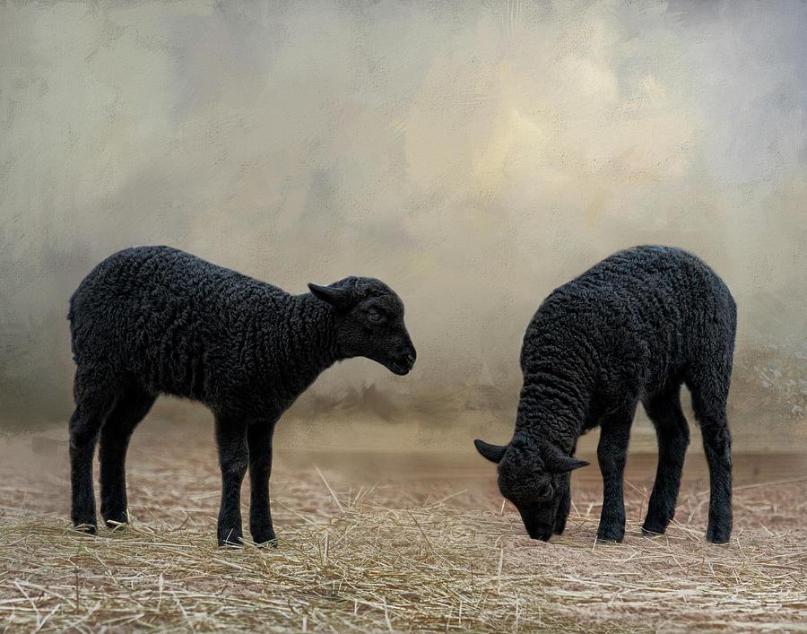 Baa, Baa Black Sheep by Kelley Parker