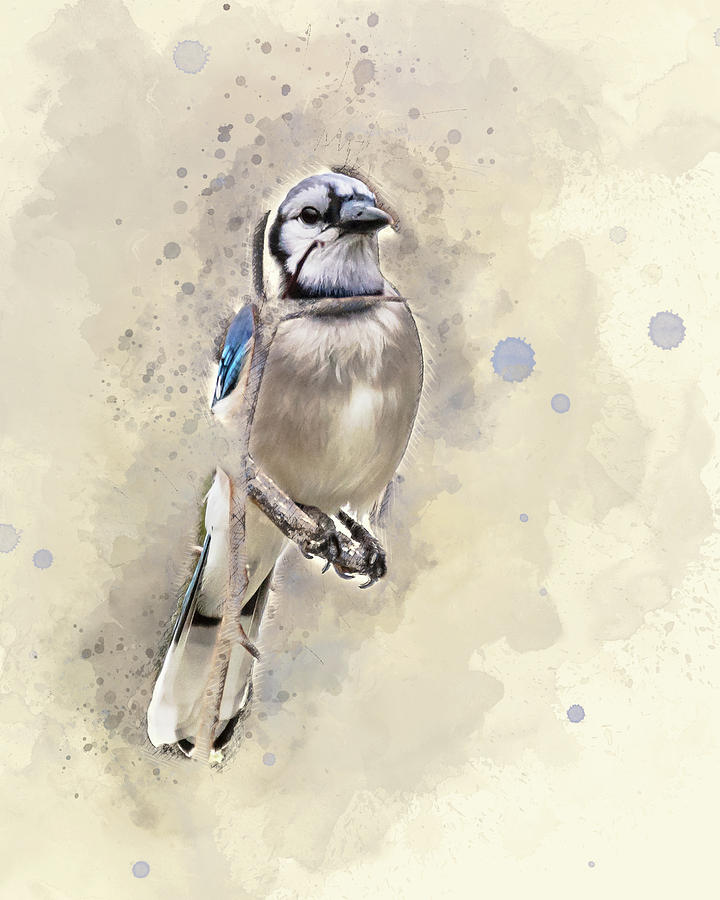 Baby Blue Jay by Jennifer Grossnickle