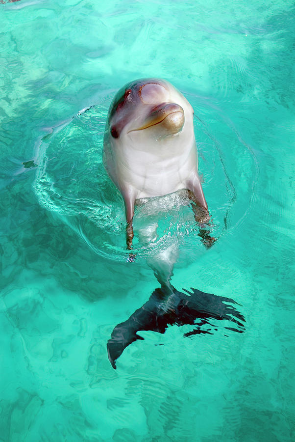 Animals In The Wild Photograph - Baby Dolphin by Nature/uig