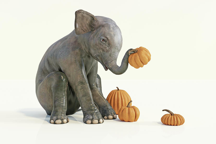 Elephant Digital Art - Baby Elephant And Pumpkins by Betsy Knapp