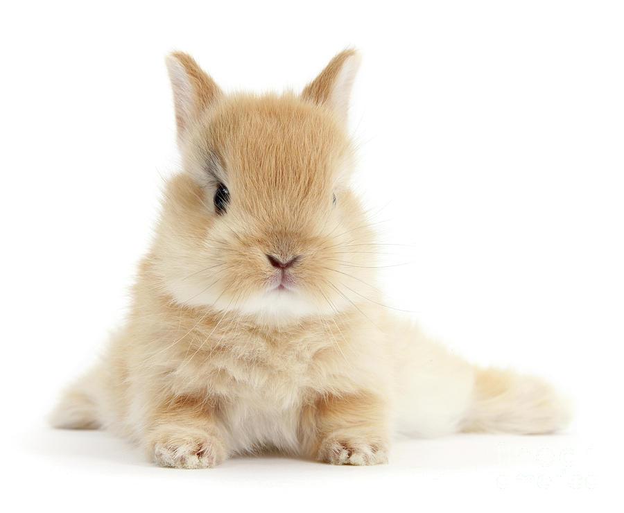 Baby Love Bunny by Warren Photographic