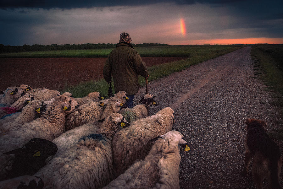 Animals Photograph - Back Home by Juanjo Mediavilla