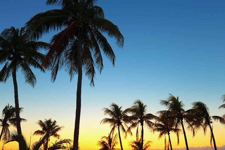 Back Lit Palm Trees With Sunset In Photograph by Pawel.gaul