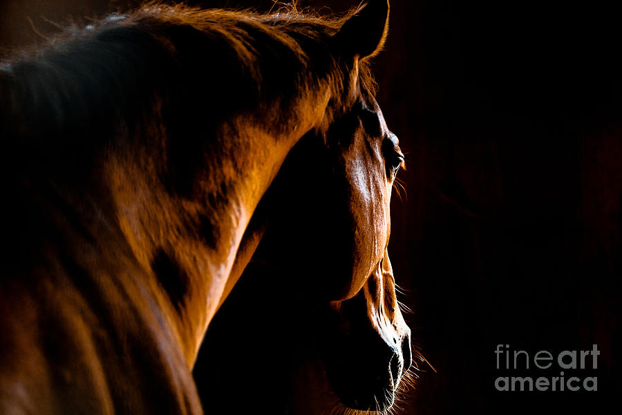 Horse Racing Photograph - Back Shot Of A Horse by Makieni