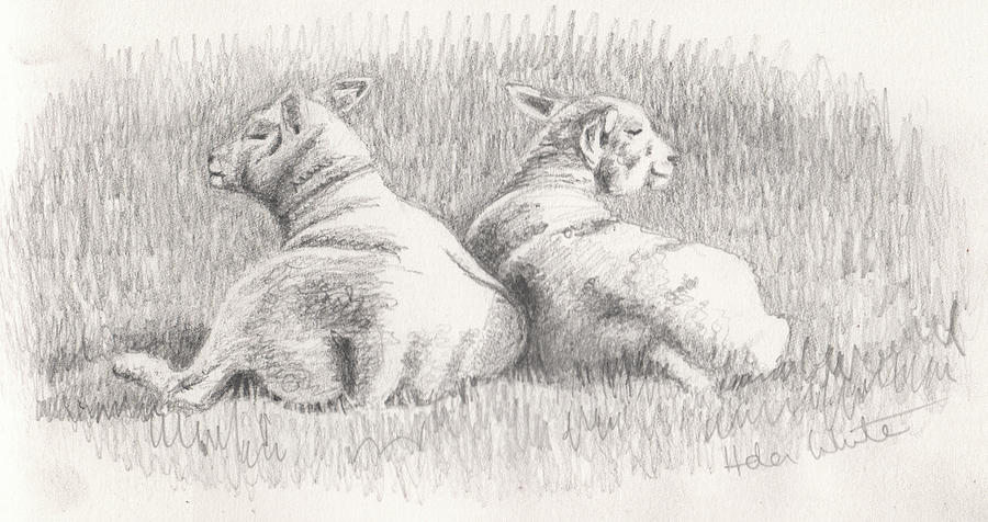 Lambs Mixed Media - Back to back by Helen White