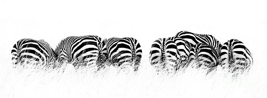 Mara Photograph - Back View Of Zebras In A Row  Horizontal Banner by Jane Rix