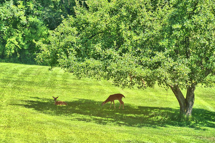Apple Photograph - Backyard Babies by Jamart Photography