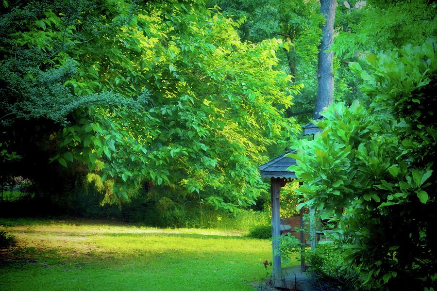 Backyard Beauty by Barry Jones