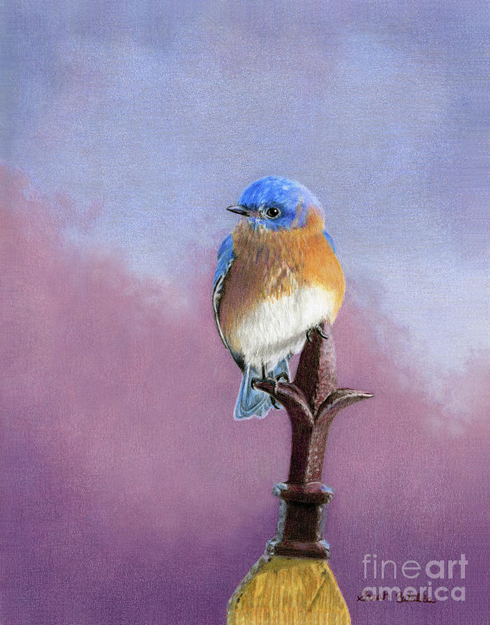 Bluebird Painting - Backyard Bluebird by Sarah Batalka