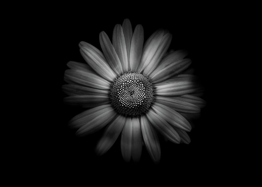Backyard Flowers In Black And White 31 by Brian Carson