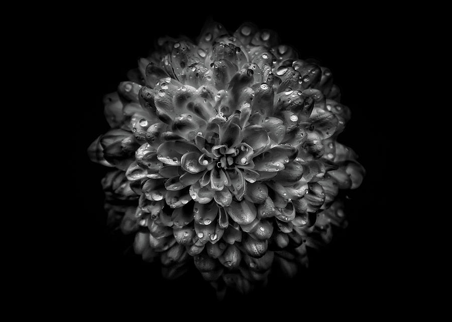 Backyard Flowers In Black And White 46 Photograph