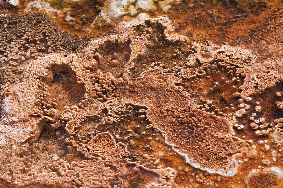 Bacterial Mat Close-up Photograph by Elsvandergun