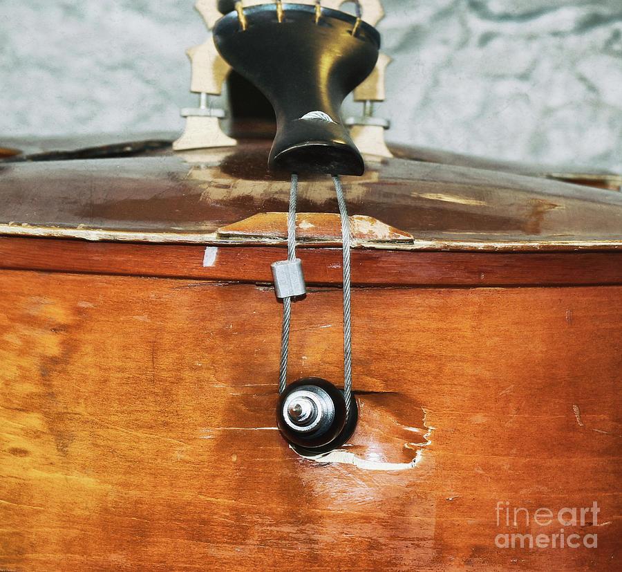 Bass Photograph - Badass Bass  by Steven Digman