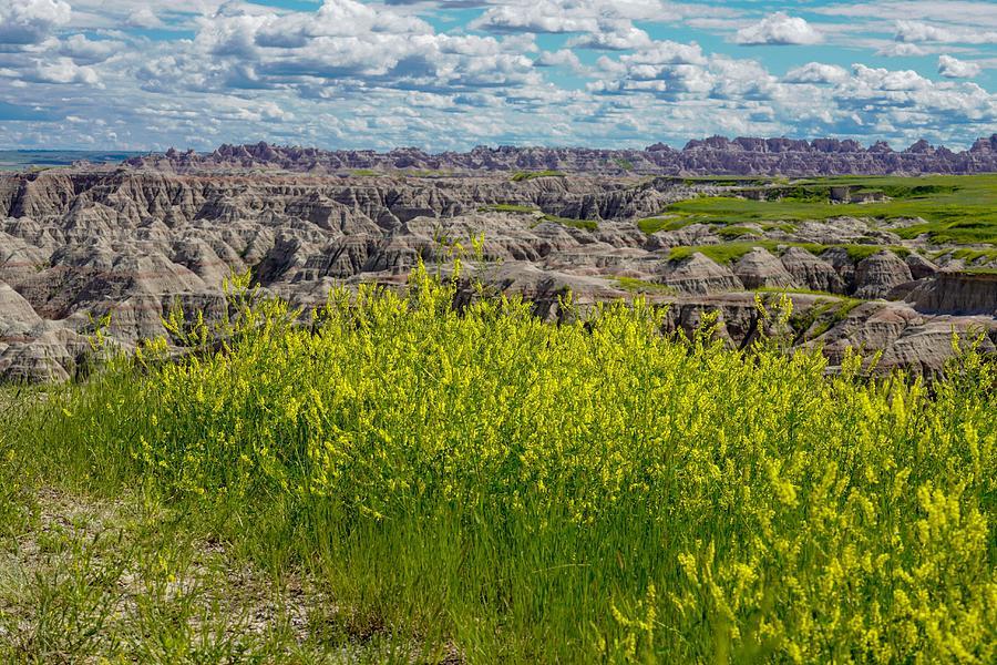 Badlands in Bloom by Susan Rydberg