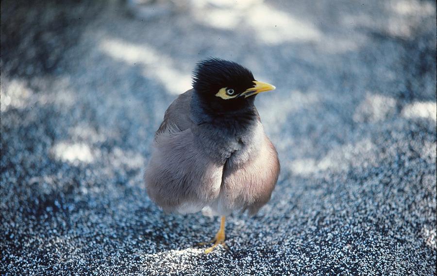 Bird Photograph - Balancing Act by Marty Klar
