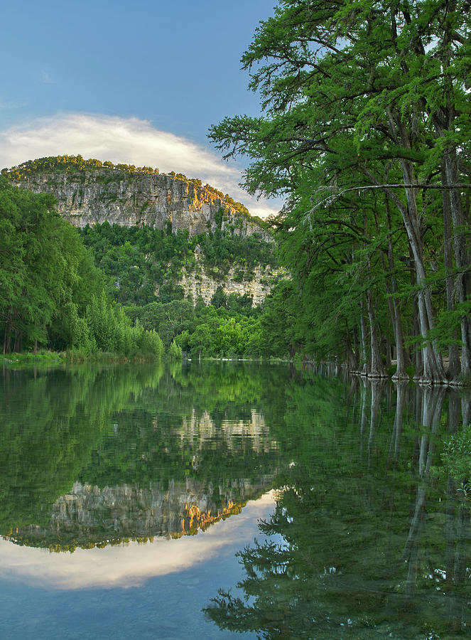 Mp Photograph - Bald Cypress Trees Along River, Frio by Tim Fitzharris