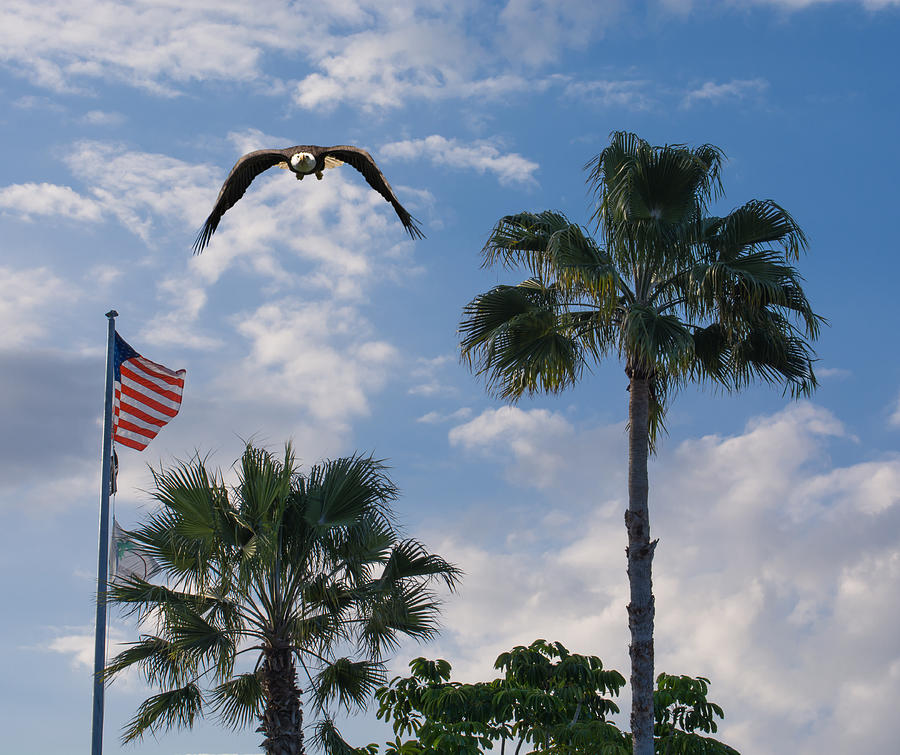 Bald eagle and flag by Zina Stromberg