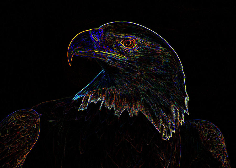 Bald Eagle Digital art by Chris Flees