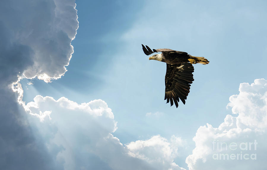 Bald Eagle Flying in clouds towards the Sun by Patrick Wolf