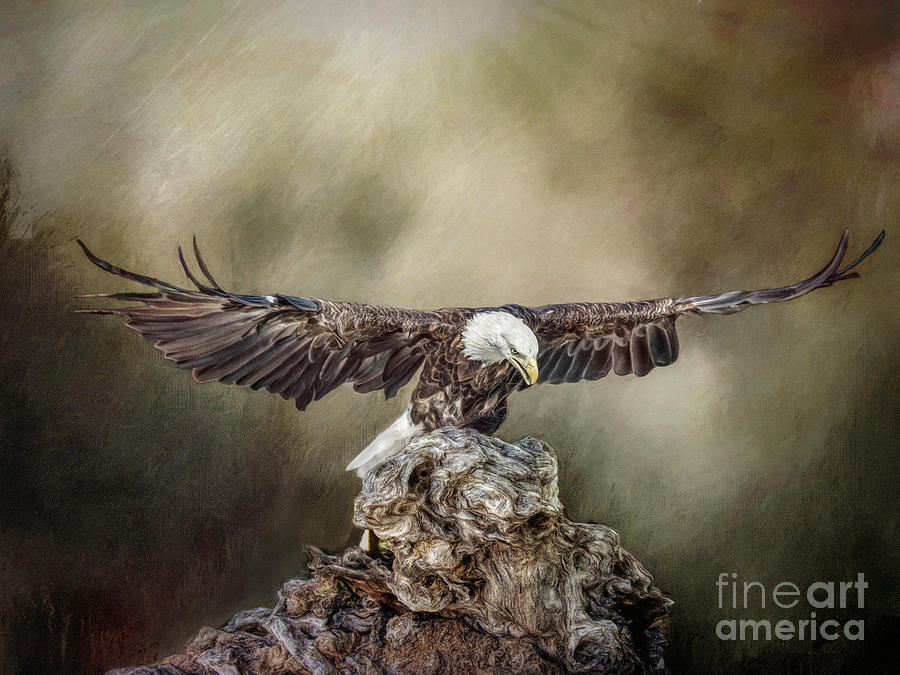 Bald Eagle landing by Brian Tarr