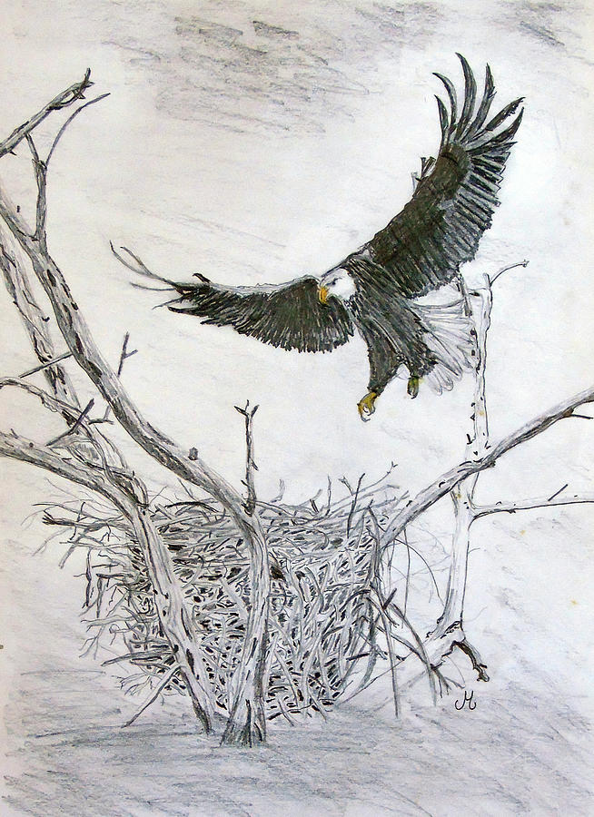 Bald eagle by Maria Woithofer