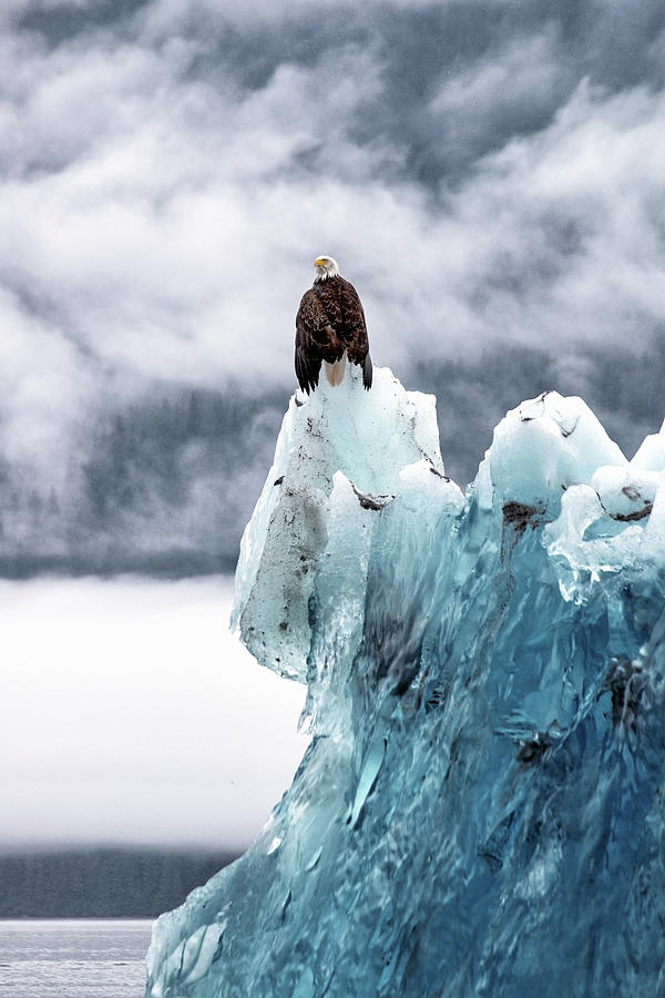 Bald Eagle On The Glacier Photograph by Naphat Photography