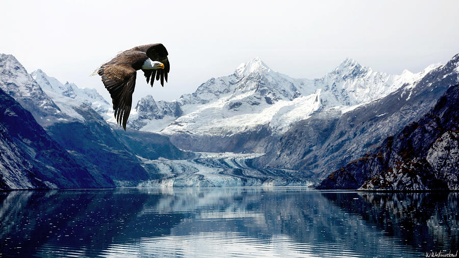 Bald Eagle over Glacier by Weston Westmoreland