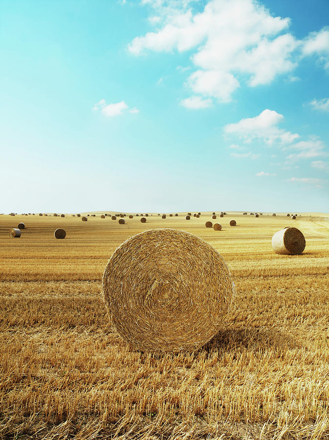 Bales Of Hay In Harvested Field Photograph by Henrik Sorensen